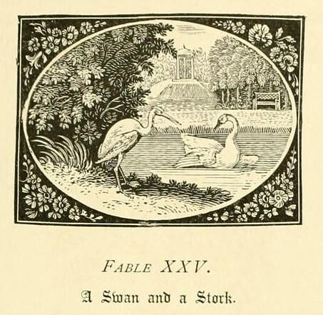 Cygnus et Ciconia