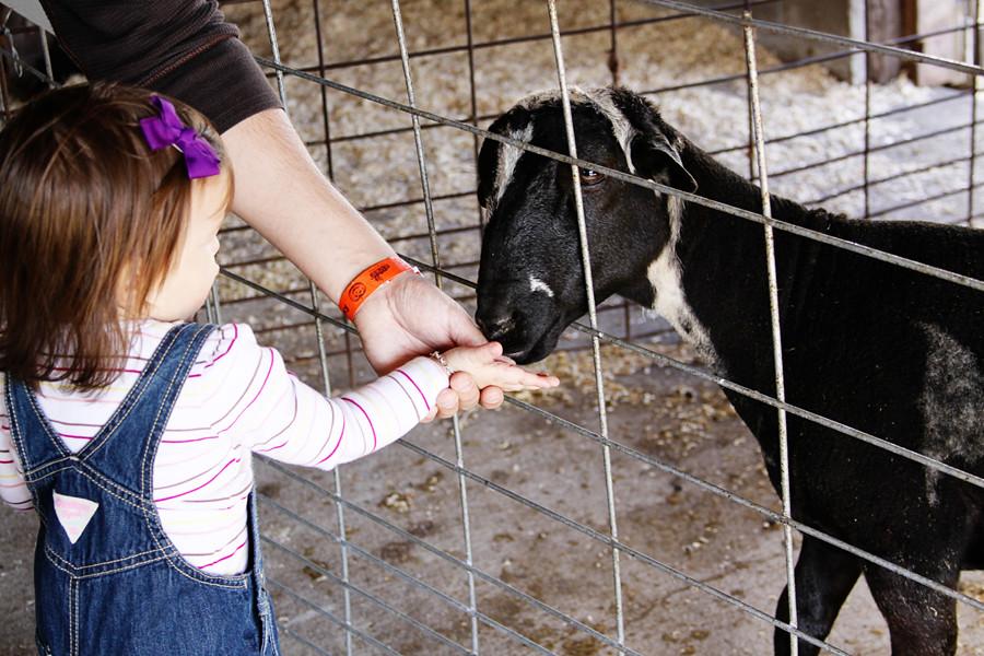 Rader farm 2010 (47))blog
