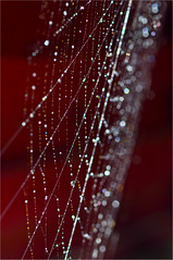Jewelry (HannyB) Tags: droplets dof web jewelry 100v10f jewellery jewels flickrsbest 30faves30comments300views infinestyle