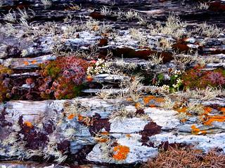 lichen garden