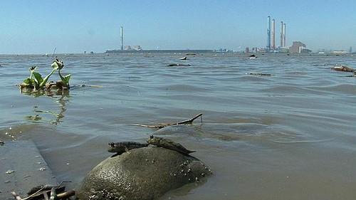 彰化大肚溪口與台中火力電廠及彈塗漁;圖片來源:環境影像部落格