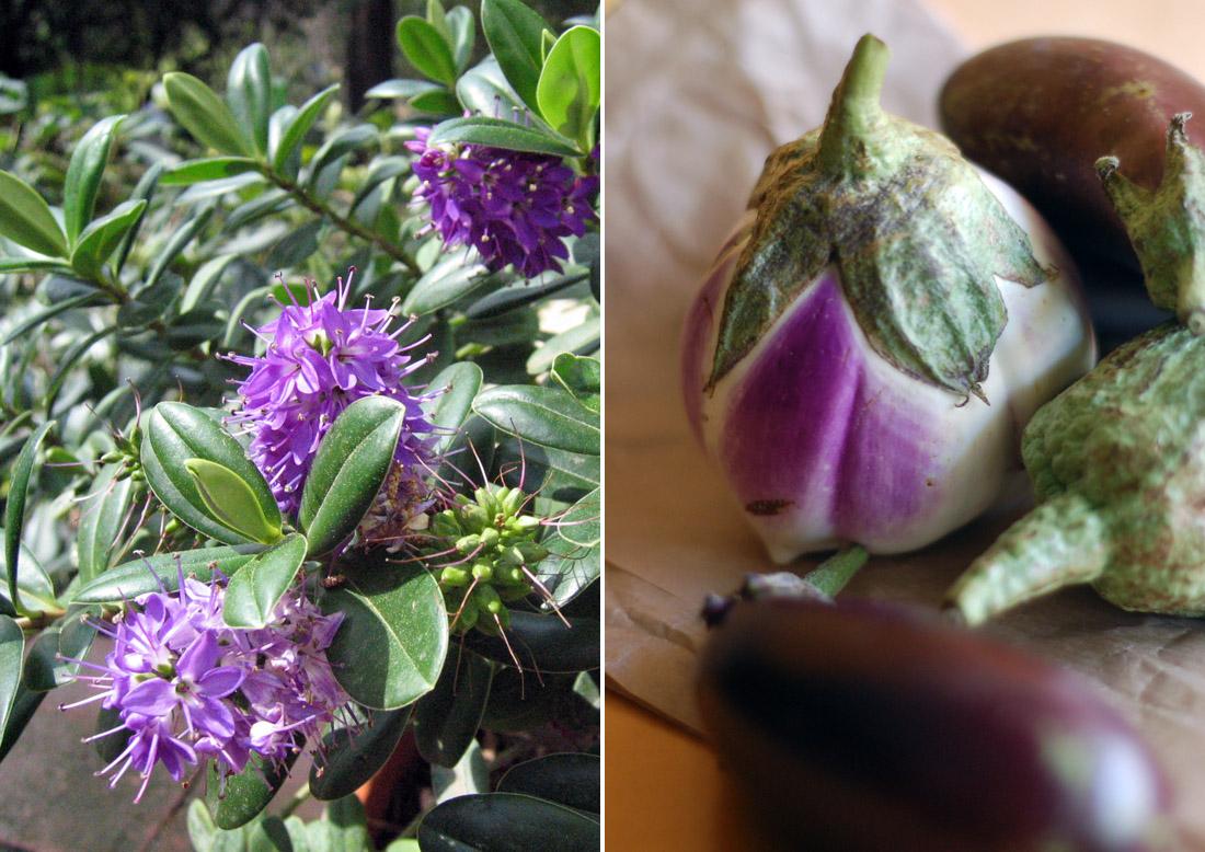 beringelas e flores roxas