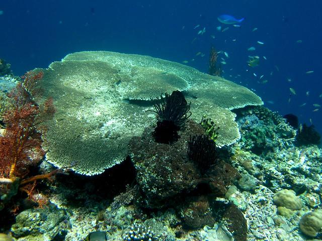 Pulau Menjangan Island Diving