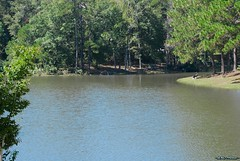(~JENO~) Tags: pictures usa nature water georgia landscape landscapes nikon scene scenes perryga houstoncounty fantasticnature d3000 photoscape nikond3000 ~jenophotos~