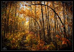 Fall in Alberta (Artvet) Tags: