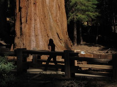 Riding Through Big Trees and a Black Bear (Video)