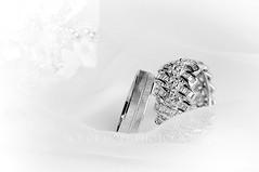 Faithful (Sky of hope) Tags: wedding white macro love up engagement nikon focus couple close band jewelry ring diamond explore jewels pure frontpage faithful d300