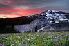 Finding Paradise (Vinnyimages) Tags: flowers sunset mountain canon washington northwest mountrainier rainier cascades canon5d washingtonstate northwestpacific vinnyimages wwwvinnyimagescom vinnyimagescom