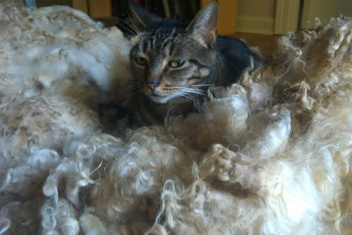 Stella loves a nap on sheep fleece