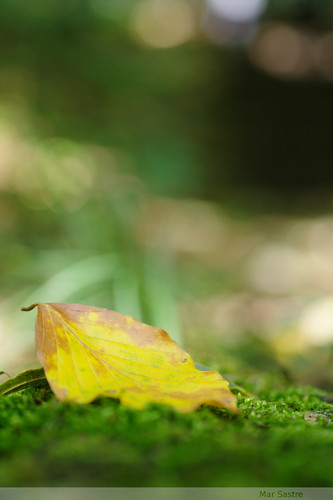 A leaf on my way