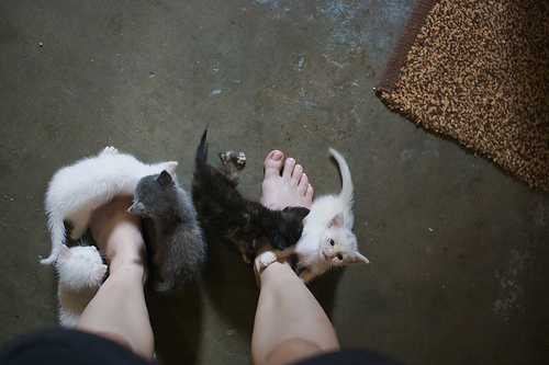 catslippers