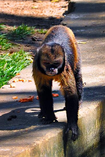 soteropoli.com fotografia fotos de salvador bahia brasil brazil 2010 zoo zoologico by tuniso (23)