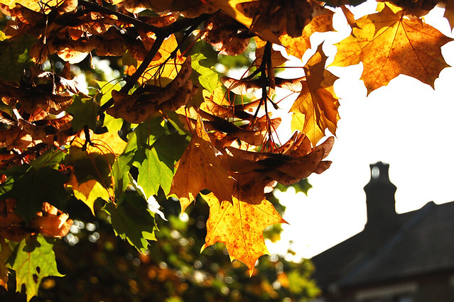 Autumnnnnn