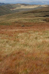 Deer grass in Mosedale