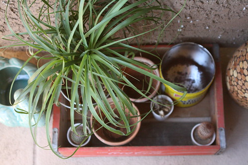 pots. top view.