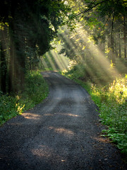 Beam of Light (tomkraetschmer) Tags: street morning light sun woods ray path beam