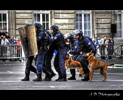 Police Hdr (Alexis.D) Tags: dog chien paris france helmet police shield prefecture brigade casque bouclier unit cynophile