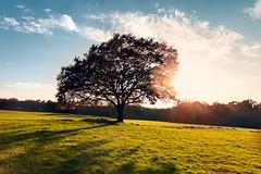 IMG_5912-311.jpg (miez!) Tags: summer sky tree fall nature sunshine canon germany landscape geotagged eos sommer herbst wiese himmel flare 1750 tamron landschaft baum deu gegenlicht rheinlandpfalz sonnenschein eiche westerwald nsg naturschutz 50d tamron1750 canoneos50d elkenroth newphotodistillery kotzenroth geo:lat=5072174833 geo:lon=785481667