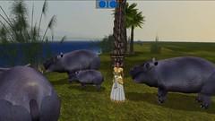 Hippos can be more dangerous than crocodiles along the Nile in virtual Amarna (Akhetaten) (mharrsch) Tags: ancient egypt hippo 18thdynasty nefertiti akhenaten virtualworld meritaten hippopatomus amarna virtualenvironment mharrsch akhetaten heritagekey