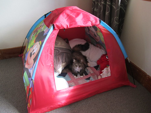 Refuge in the man tent