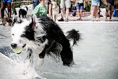Wave Maker (Anda74) Tags: water pool colorado diving september bordercollie ouzo canonef1740mmf4lusm parker 2010 wetdog barkerdays