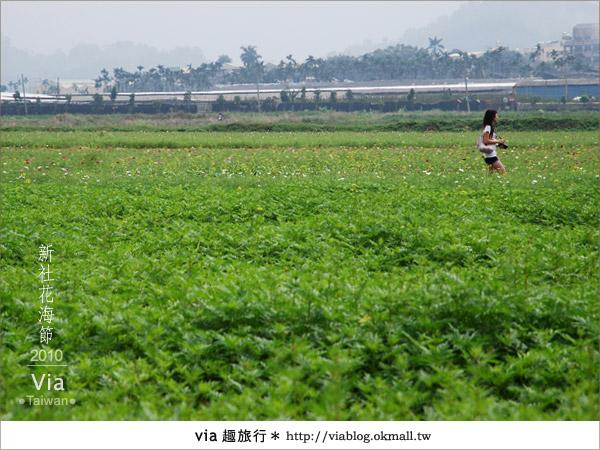 【新社花海】新社花海2010~via拍回來的最新花況6