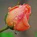 Edmond Rose Photo 9