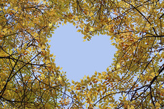 Golden Heart (Dragan*) Tags: autumn trees sky cute fall love nature colors leaves yellow season golden october heart amor branches magic serbia creative valentine foliage dolce getty belgrade cuore amore beograd corazon valentinesday srbija giap