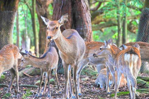 Deer 02/HDR TONE