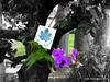 Chok chai Thailand (350.org) Tags: thailand 350 chokchai 20794 350ppm uploadsthrough350org actionreport oct10event