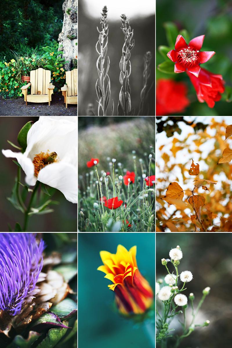 pasadena garden blog 2