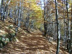 culorile toamnei (bseteanu) Tags: autumn landscape autumncolors romania toamna maramures culoriletoamnei