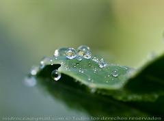 canicas (Isidr☼ Cea) Tags: macro gotas reflejos brillos zuiko50mmf20 gotasdeagua olympuse520 isidrocea