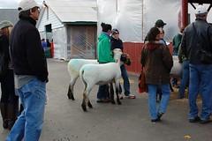 Rhinebeck Wool Festival 2010
