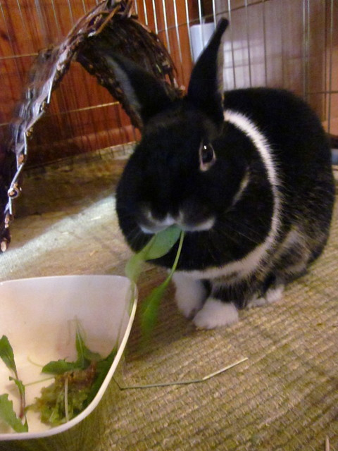 Oreo having her salad.