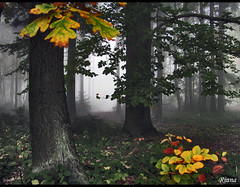 Autumn fog (Rianetna) Tags: wood autumn nature fog les forest oak quercus czech natura nebbia autunno dub beech buk bosco podzim faggio quercia mlha hmla mywinners platinumphoto ondejov natureandnothingelse updatecollection ucreleased