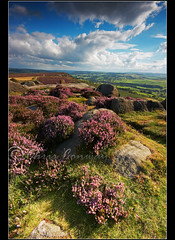 Curbar Heather. (Digital Diary........) Tags: sky colour landscape heather peakdistrict chrisconway