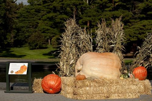 World's Heaviest Pumpkin
