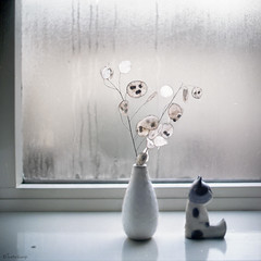 witten (moggierocket) Tags: stilllife white 6x6 window wet cat mediumformat honesty figurine 88 kiev judaspenning lunariaannua