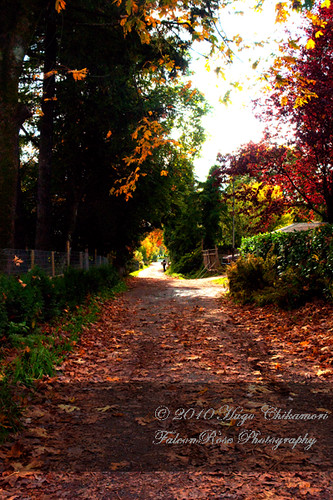 10-30-2010_autumn_alley1_wm