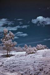 Zapotecas IR (2010) 07 (cguevara_aguilar) Tags: cielo árbol infrarojo zapotecas ‡rbol rbol procesadas zapotecasir