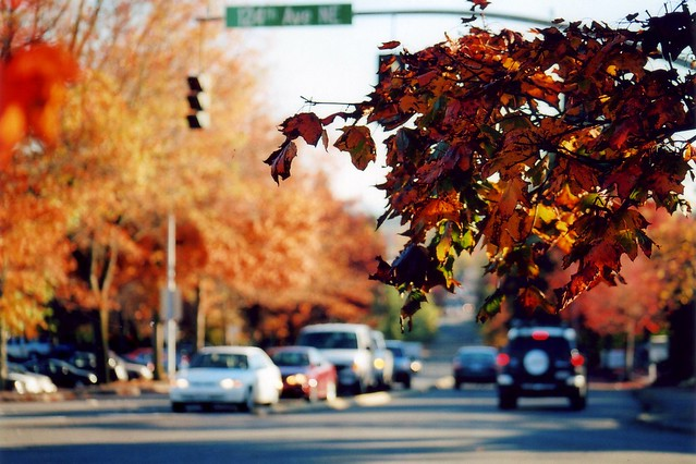 Fall Colors at 124th Avenue NE