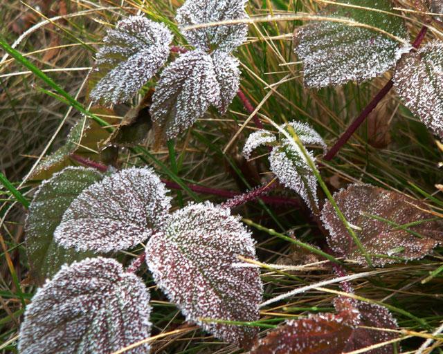 november_frost