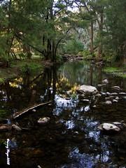 THE TURON RIVER - NSW - AUSTRALIA (smortaus) Tags: rural landscape is image photos australian australia images nsw hayes australianlandscape myphoto lamdscape australianimages australianlanscape of thisisaustralia photoslandscapes dannyhayes nswrural landscapesofnsw australianphotoss nswthis ruraldanny