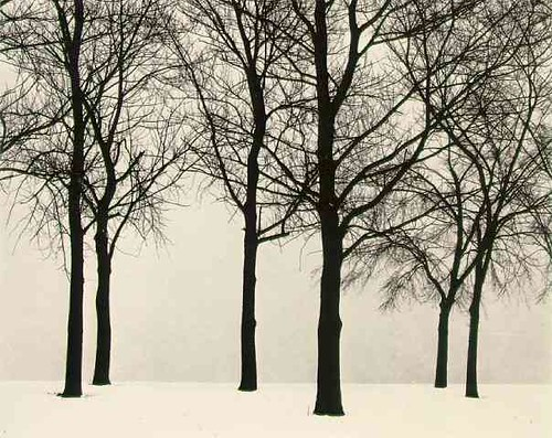 callahan_trees