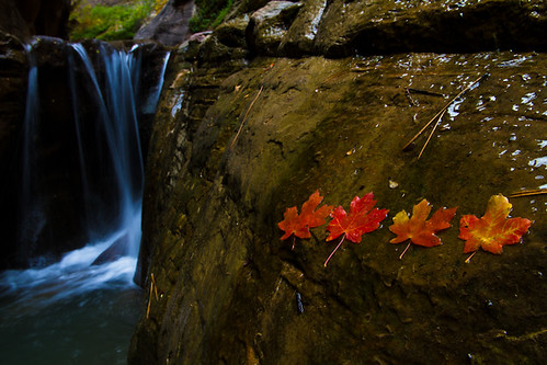 Leaves and Waterfall, Orderville Canyon