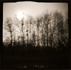 Les arbres du canal (joel lintz) Tags: trees bw white black tree 120 canal lomo lomography noir 4x4 nb stellar diana f alsace neopan clone et arbre blanc waterway argentique acros lomographie clône