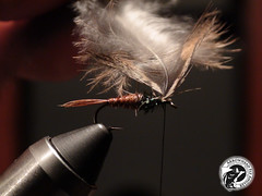 pheasant tail soft hackle