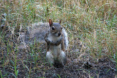 flsquirrel