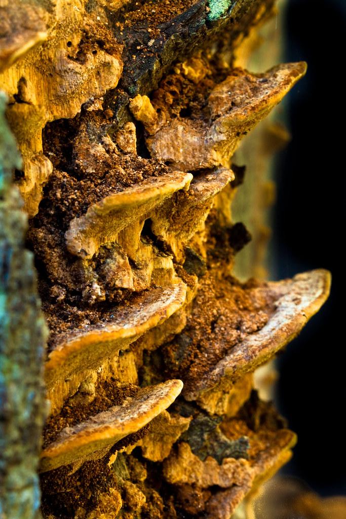 Lichen Sculpture